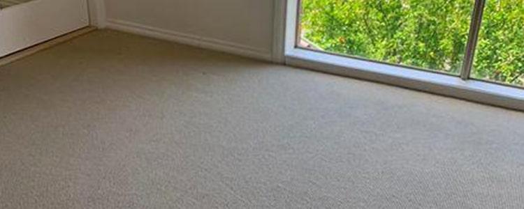 Expert carpet cleaner